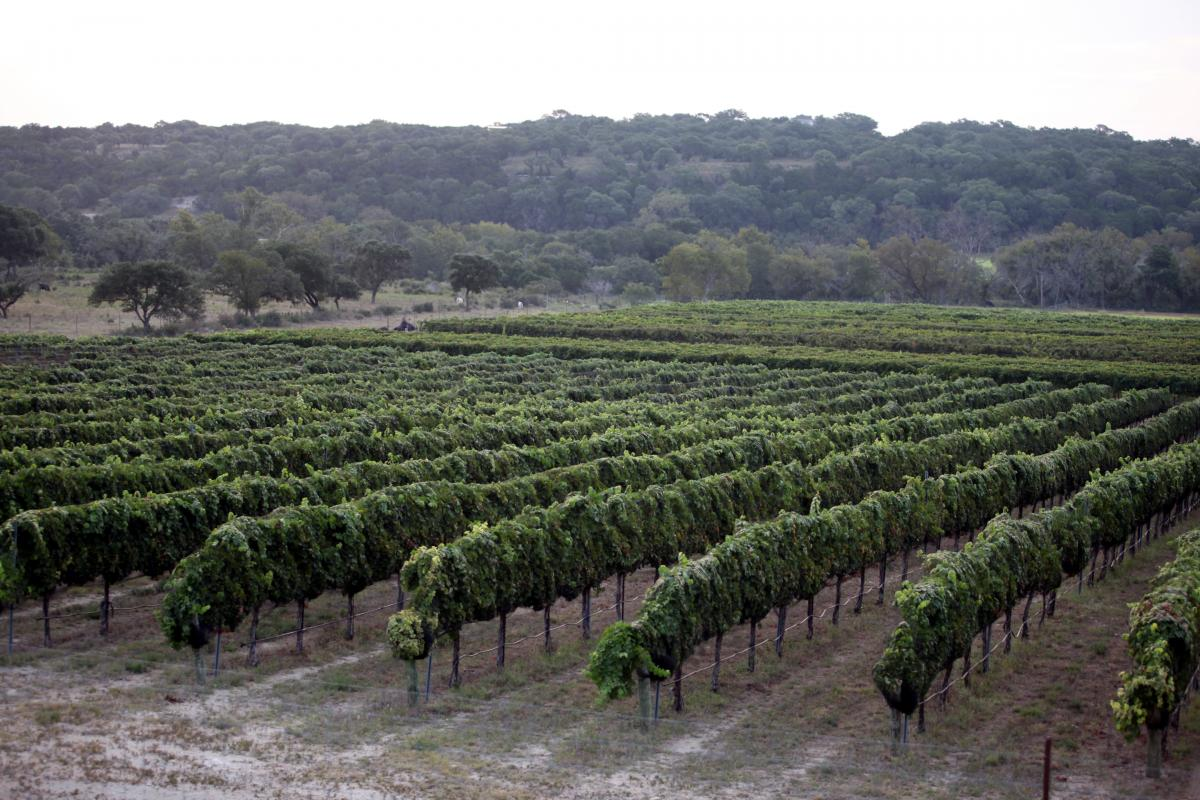 Winery Bed And Breakfast Hill Country Texas