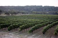 Image of Texas Hill Country Vineyard & Winery Tour